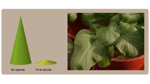 Why foliar feeding?