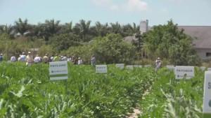 Syngenta Launches New Zucchini Variety
