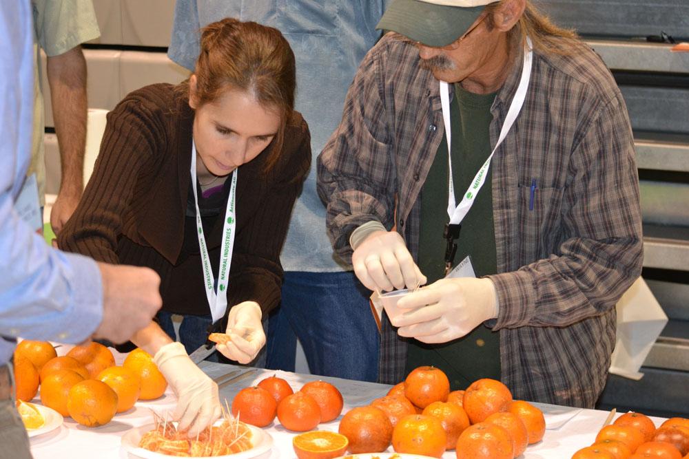 melontesting